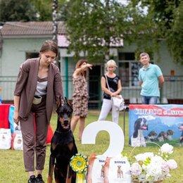 Услуги для животных - Подготовка и показ собак на выставках, 0