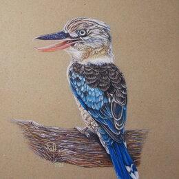 Картины, постеры, гобелены, панно - Кукабарра (зимородок хохотун). Сухая пастель. Птица,картина, 0