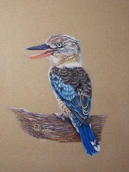 Картины, постеры, гобелены, панно - Кукабарра (зимородок хохотун). Сухая пастель.…, 0