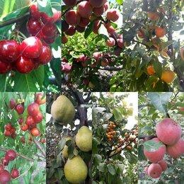Рассада, саженцы, кустарники, деревья - Саженцы плодово-ягодных и декоративно-лиственных…, 0
