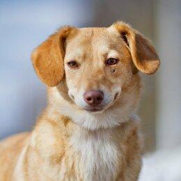 Собаки - Собака улыбака Кэрри ищет дом. Стерилизована, привита., 0