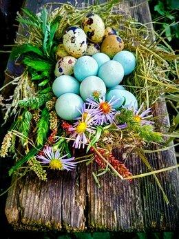 Птицы - Инкубационное яйцо перепела, 0