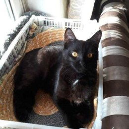 Кошки - Кот 2 года. , 0