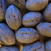 Орех маньчжурский, сердцевидный. Гинкго Билоба по цене 400₽ - Рассада, саженцы, кустарники, деревья, фото 2