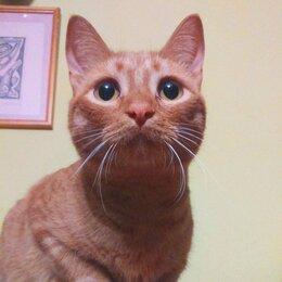 Кошки - Рей, молоденький котик, 0