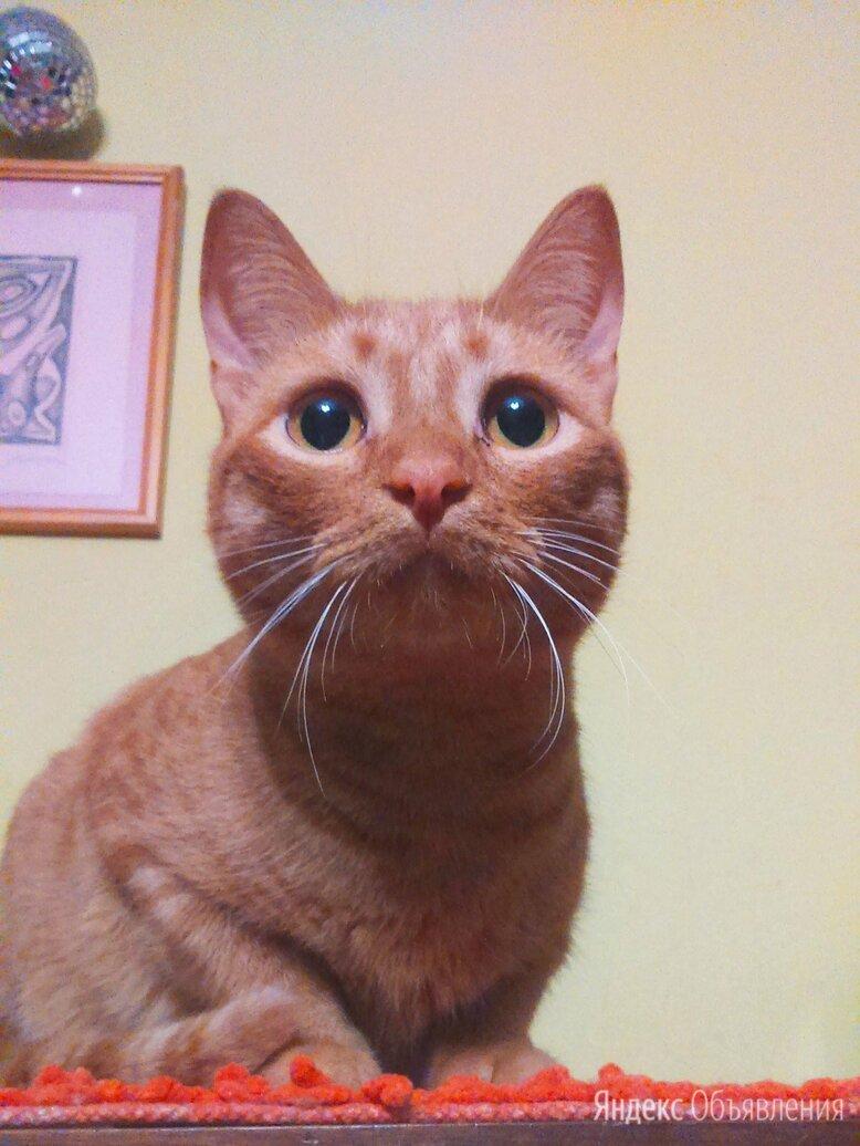 Рей, молоденький котик по цене даром - Кошки, фото 0