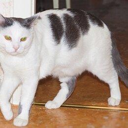 Кошки - Ласковые котики братаны в поиске дома, 0