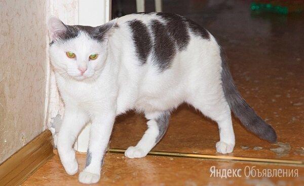 Ласковые котики братаны в поиске дома по цене даром - Кошки, фото 0