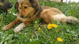 Собаки - Ласковая собака ищет дом, 0