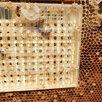 Пчелопакеты , матки , пчелы , улики . по цене 4200₽ - Сельскохозяйственные животные и птицы, фото 3