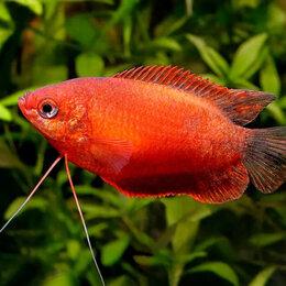 Аквариумные рыбки - Рыбки. Песок. Растения. Декор., 0