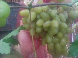 Рассада, саженцы, кустарники, деревья - Саженцы винограда.инжира.персика малины…, 0
