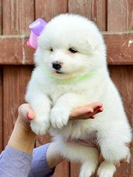 Собаки - Самоедская лайка щенки, 0