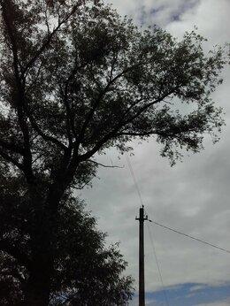 Дрова - Отдам деревья на дрова, 0