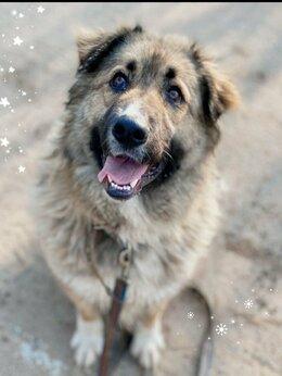 Собаки - Граф. Отважный защитник и лучший друг, 0
