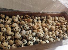 Птицы - Инкубационные  перепелиные яйца, 0