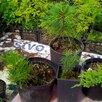 Саженцы кедр, пихта, орех маньчжурский и др по цене 200₽ - Рассада, саженцы, кустарники, деревья, фото 0