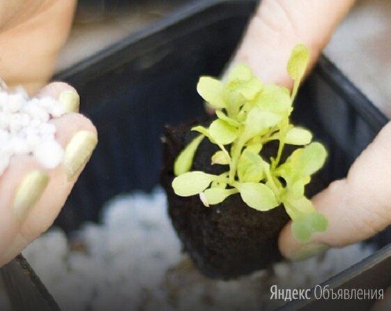 Агроперлит (перлит вспученный)  М 150, тара по 50л. по цене 500₽ - Субстраты, грунты, мульча, фото 0