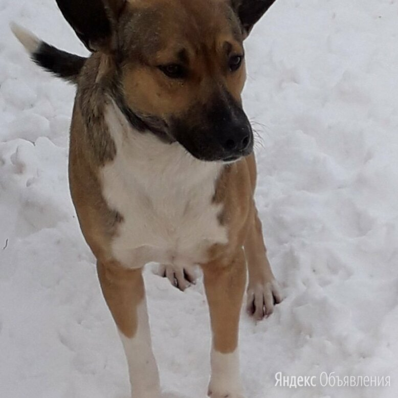 Собака погибает ..спасите ей жизнь по цене даром - Собаки, фото 0