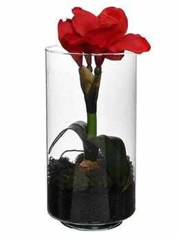 Луковичные растения - АМАРИЛЛИС в стеклянном стакане, красный, 30 см,…, 0