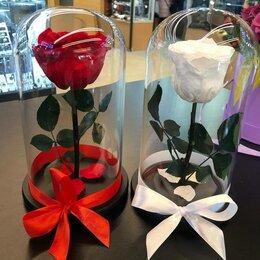 Цветы, букеты, композиции - Живая Роза в колбе, 0