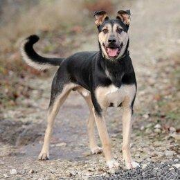 Собаки - Отдам собаку в добрые руки!  , 0
