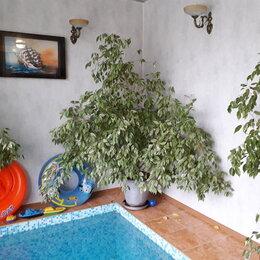 Комнатные растения - Фикус бенджамина  растение здоровое высота 1,5…, 0