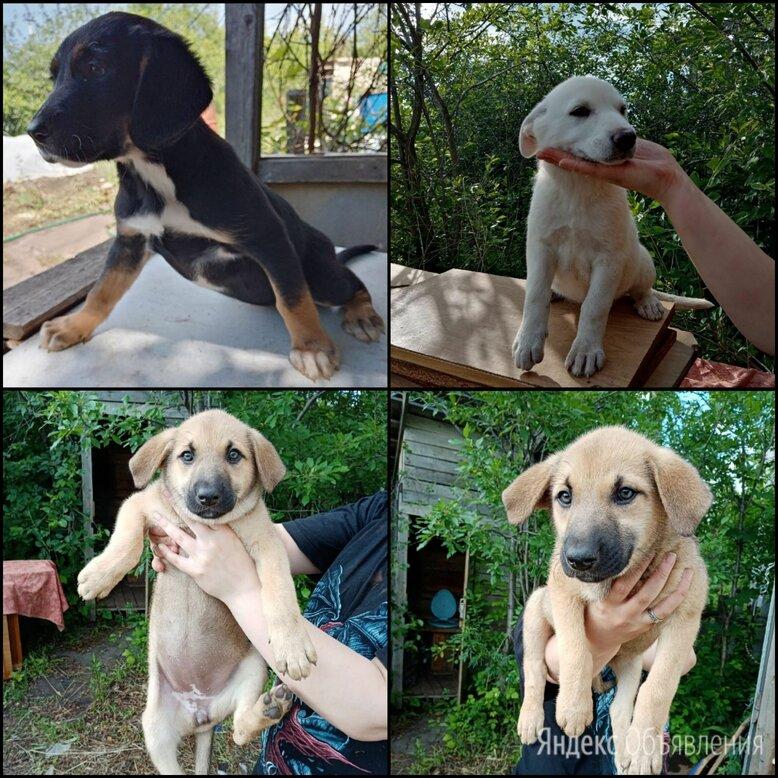 Щенки в ответственные руки  по цене 15₽ - Собаки, фото 0