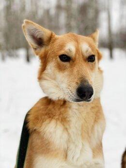 Собаки - Собака трусишка Лори ищет дом и семью, 0
