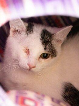 Кошки - Особенный котёнок Кики ждёт любящую семью , 0