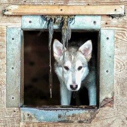 Собаки - Очень красивая собака ищет дом из приюта, в…, 0