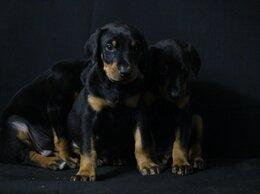 Собаки - Щенки , 0