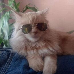Прочие товары для животных - Очки для кота, 0