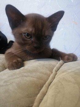 Кошки - Котик, 0