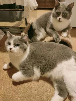 Кошки - Брат и сестра , 0