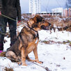 Мишутка ищет дом  по цене даром - Собаки, фото 6