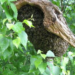 Сельскохозяйственные животные и птицы - Рои пчелиные, 0
