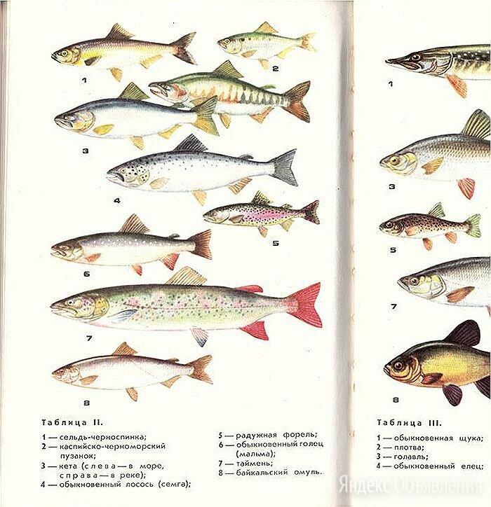 Книга справочник атлас определитель рыб Евразии по цене 1000₽ - Словари, справочники, энциклопедии, фото 0