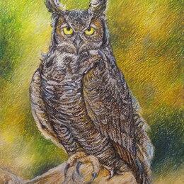 Картины, постеры, гобелены, панно - Виргинский филин. Сова,сыч,птица,природа,пастель,картина, 0