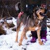 Мишутка ищет дом  по цене даром - Собаки, фото 1