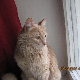 Услуги для животных - Передержка кошек, 0