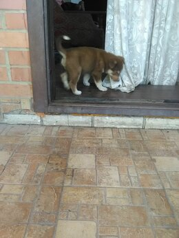 Собаки - Щенок, 0