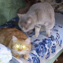 Услуги для животных - Для вязки с котом, 0