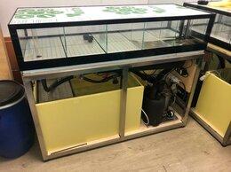Витрины - Аквариум - витрина для живых морепродуктов, 0