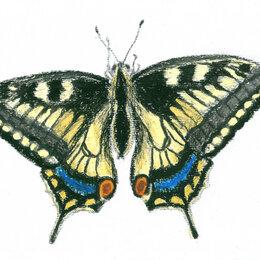 """Картины, постеры, гобелены, панно - Рисунок """"Бабочка"""" картина масляная пастель бумага 29,7х21 см Гаврилин Е.Г., 0"""