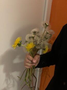 Цветы, букеты, композиции - цветы, 0