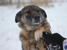 Собаки - Возьмите собаку в добрые руки , 0