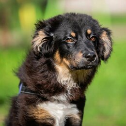 Собаки - Щенок Барни, 0