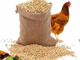 Товары для сельскохозяйственных животных - Кормосмесь, корм, комбикорм, 0