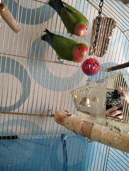 Птицы - Неразлучники, 0